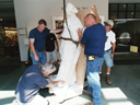 Gallery staff moving a statue