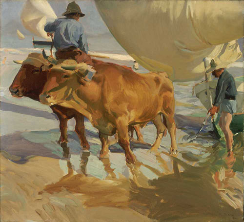 Oxen on the Beach